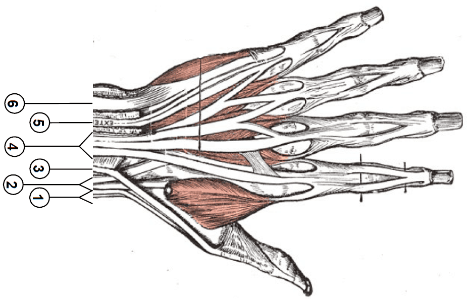 Extensor Injuries in Northern Va